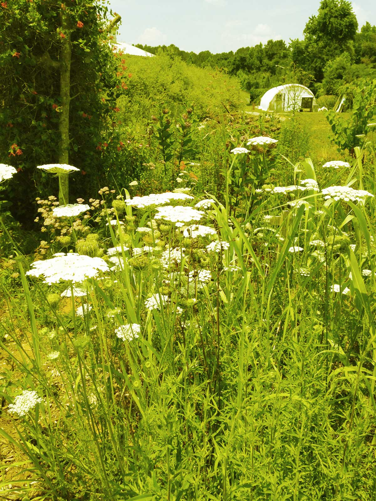 flowers-greenhouse