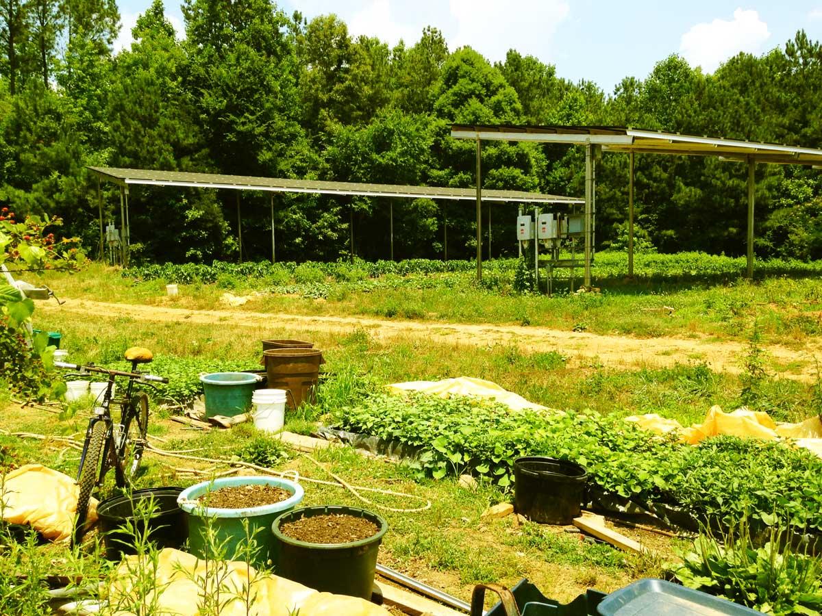solar-double-crop2