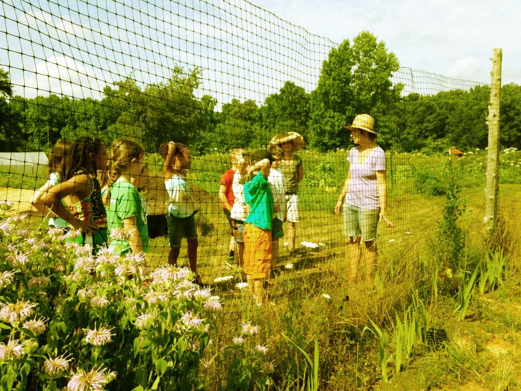 Kids' herbalism classes at Pickards Mountain this Fall