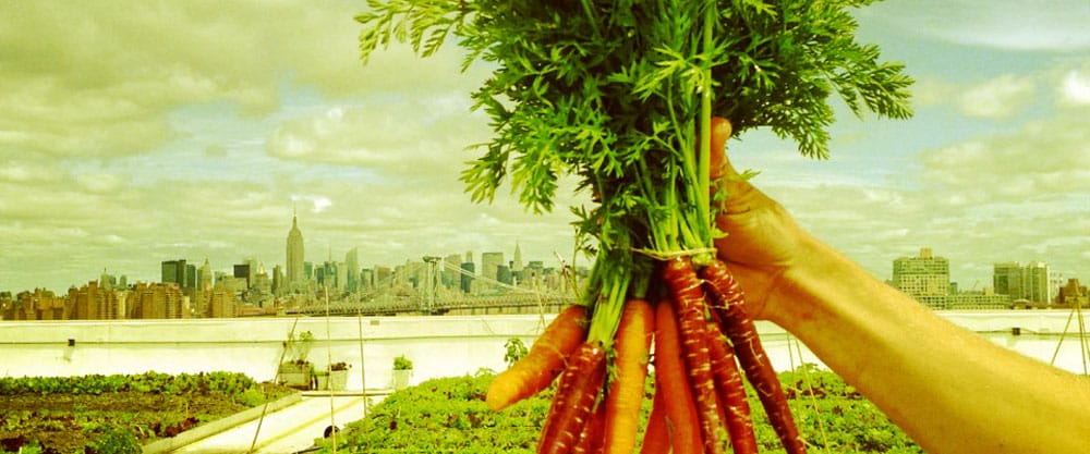 Urban farming in New York – why it's crucial to sustainability