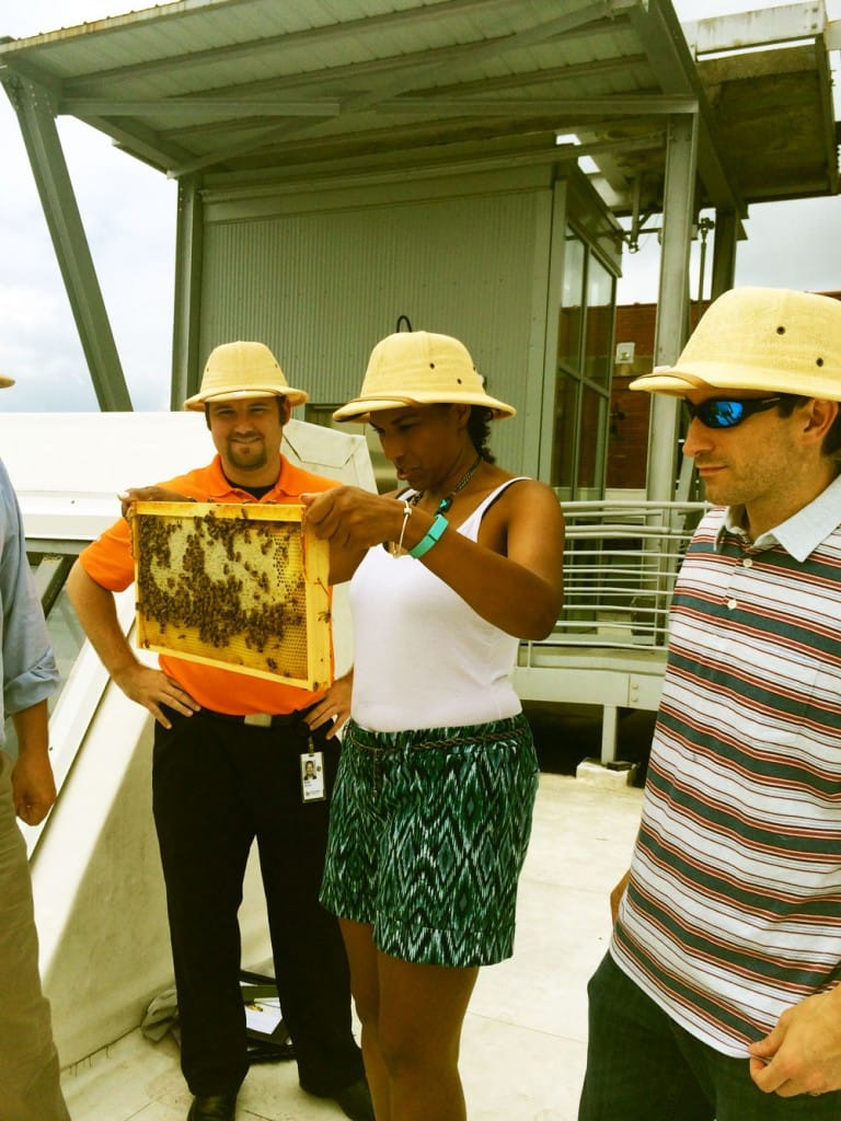 Urbanizing bees may be key to their survival