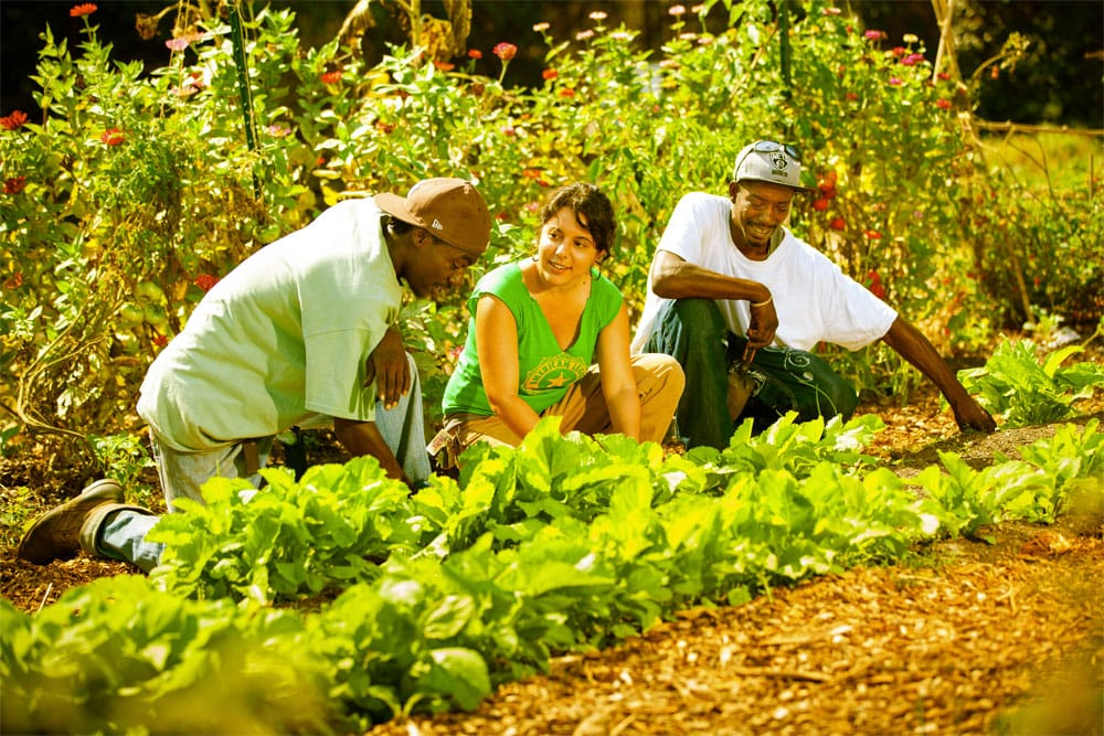 Fertilizing a food desert
