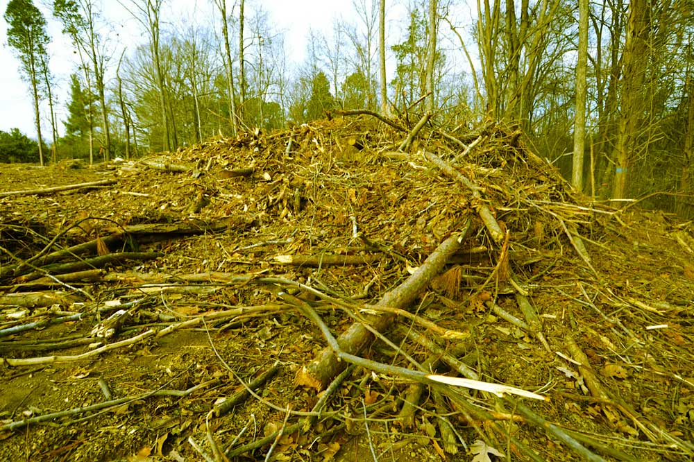 What the Chatham Park clearcut in progress looks like.