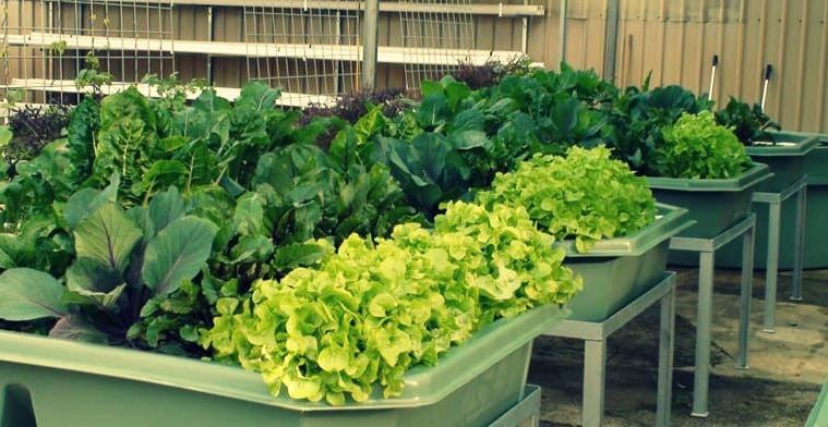 Advanced Aquaponics Series – Part 1: How to Build and Run a System Profitably