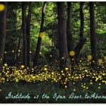 fireflies-open-shutter2