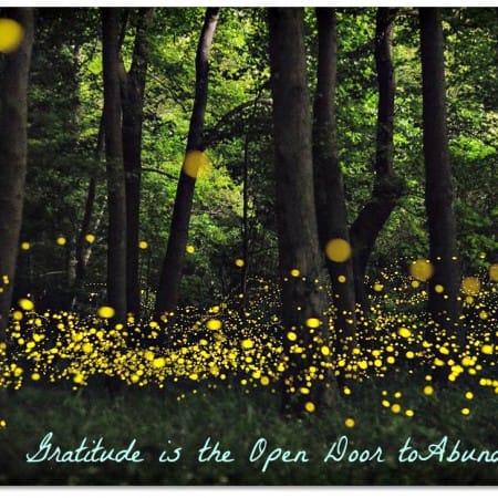 fireflies-open-shutter2