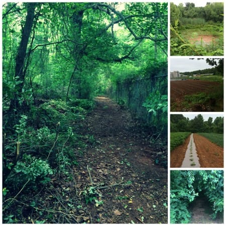 trail feature collage 5