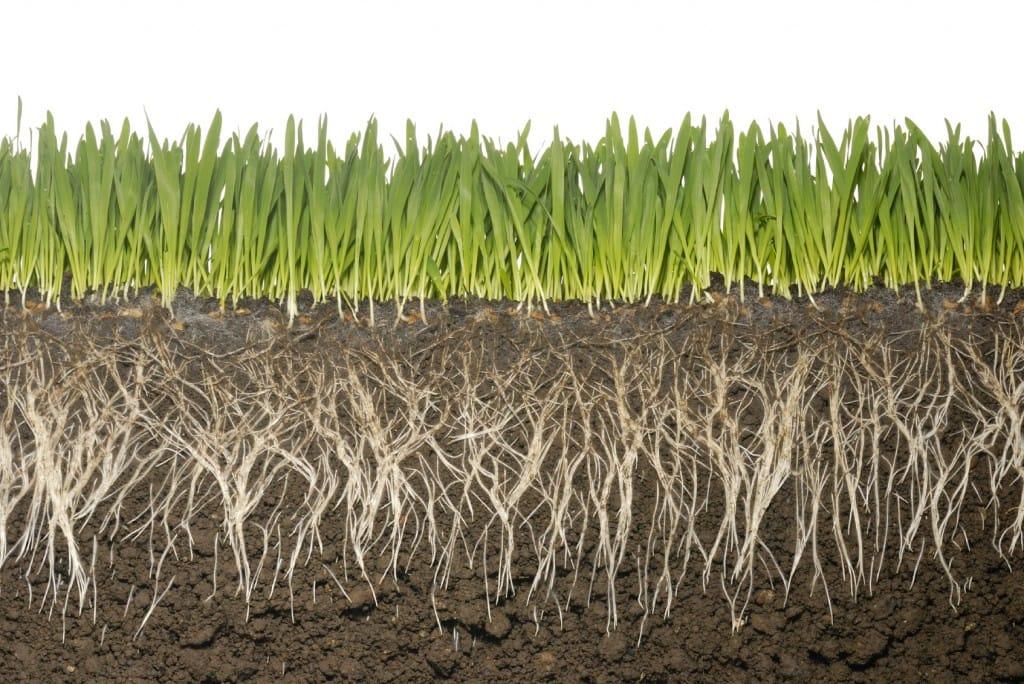 329833-grass-roots