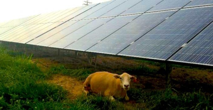 Hot Toddies and the Intangible:  Solar Battery Demystification
