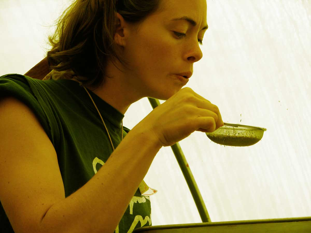 Amber learns the magic of seed saving with Farmer Doug Jones.