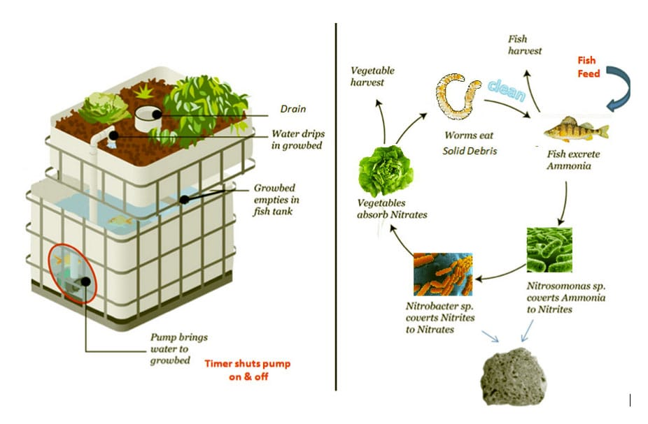 Aquaponics: a new breed of sustainable farmers + social justice activists