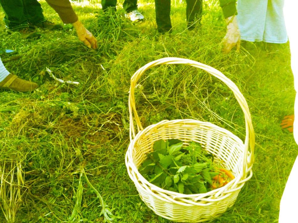 Wild-harvested herbs!