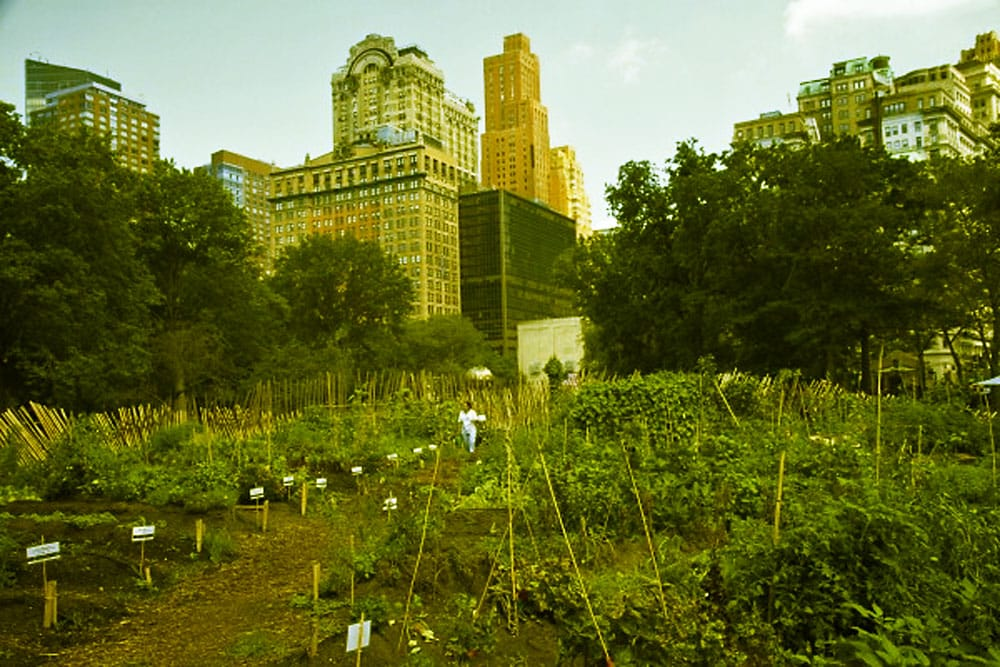Battery park urban farm.