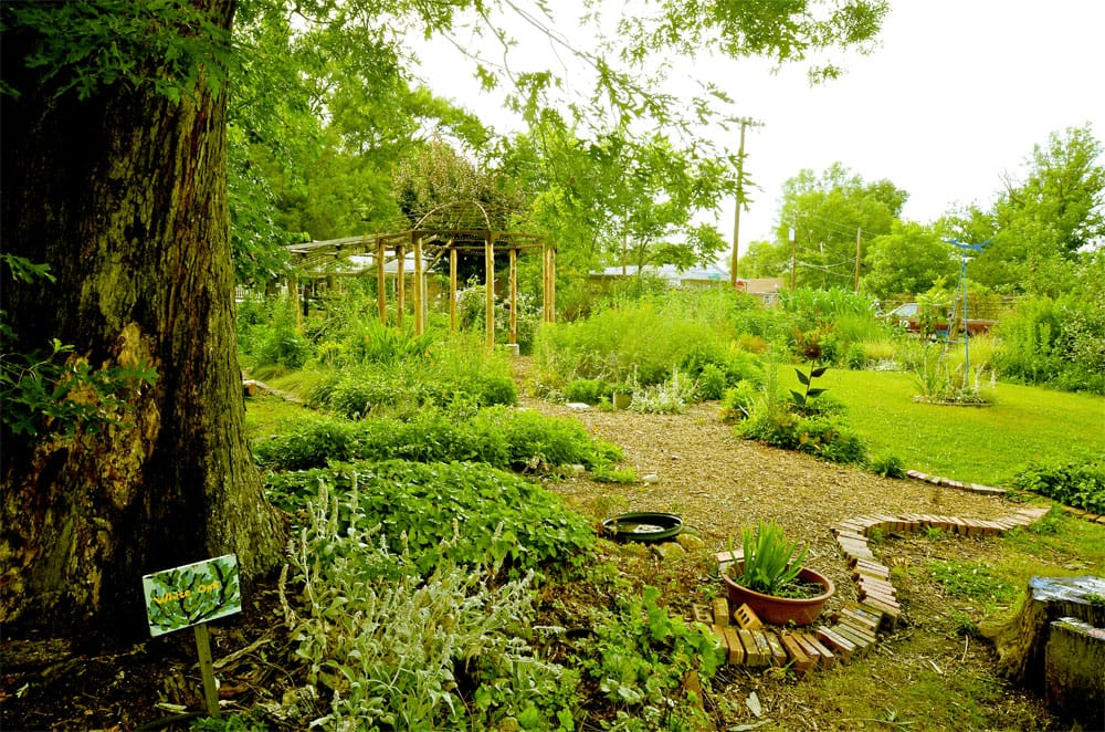 SEEDS community garden in downtown Durham, NC.