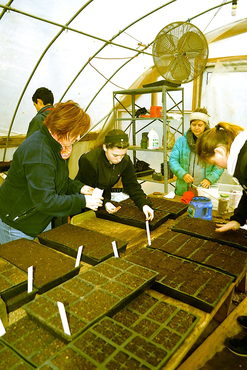 Planting seeds in the greenhouse.