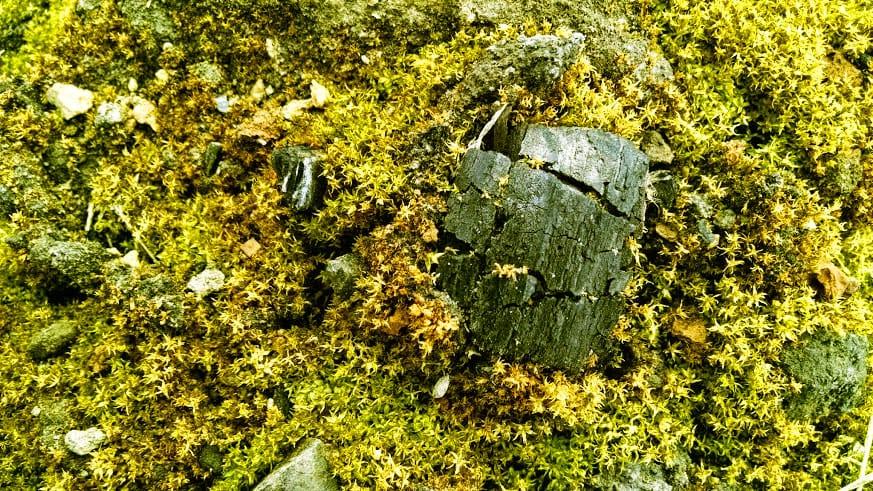 biochar-moss