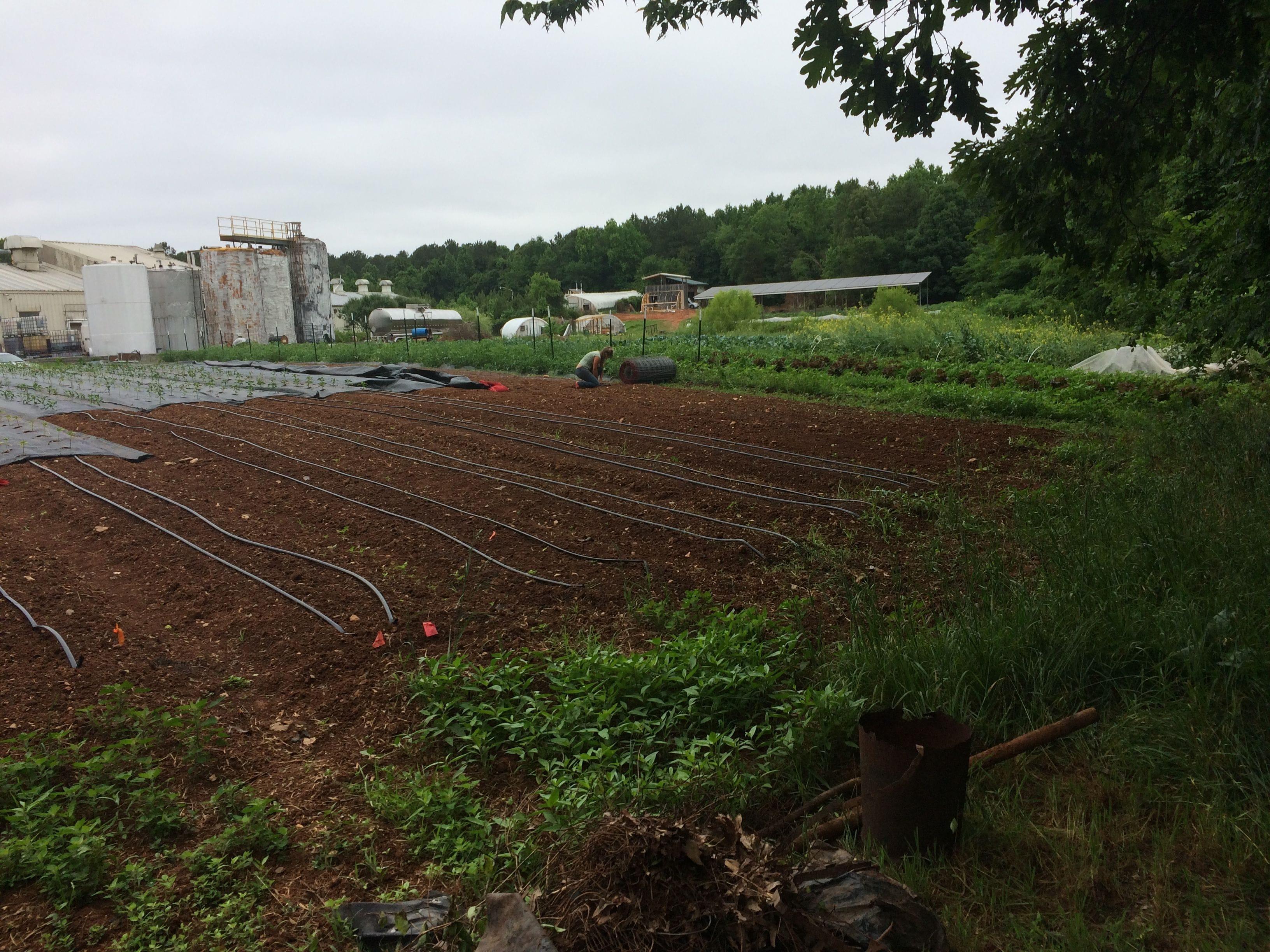 New Nature Interpretive Trail at The Plant – ABUNDANCE NC
