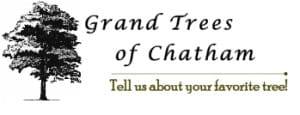 grand trees of chatham